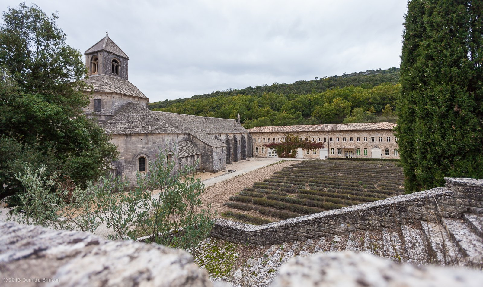 senanque-abbey-provence-france-9
