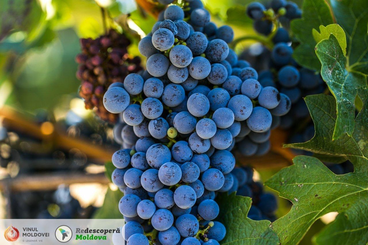 drumul-vinului-day4-et-cetera-salcuta-13