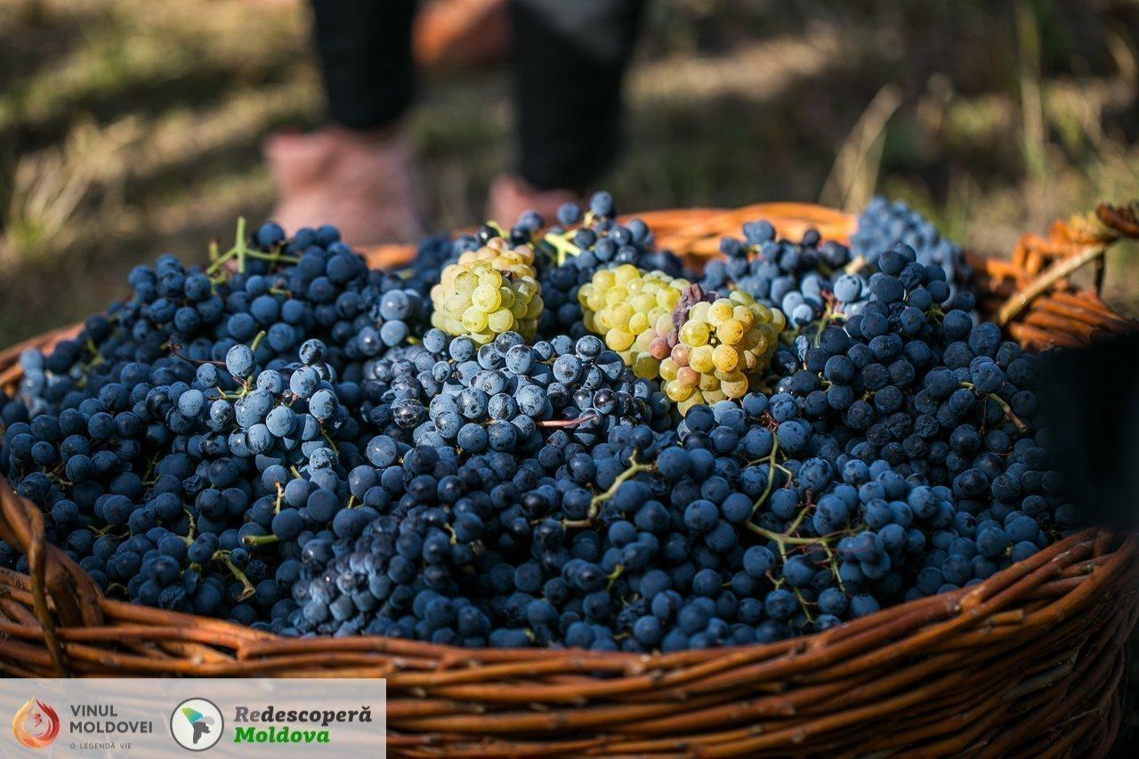 drumul-vinului-day6-cricova-41