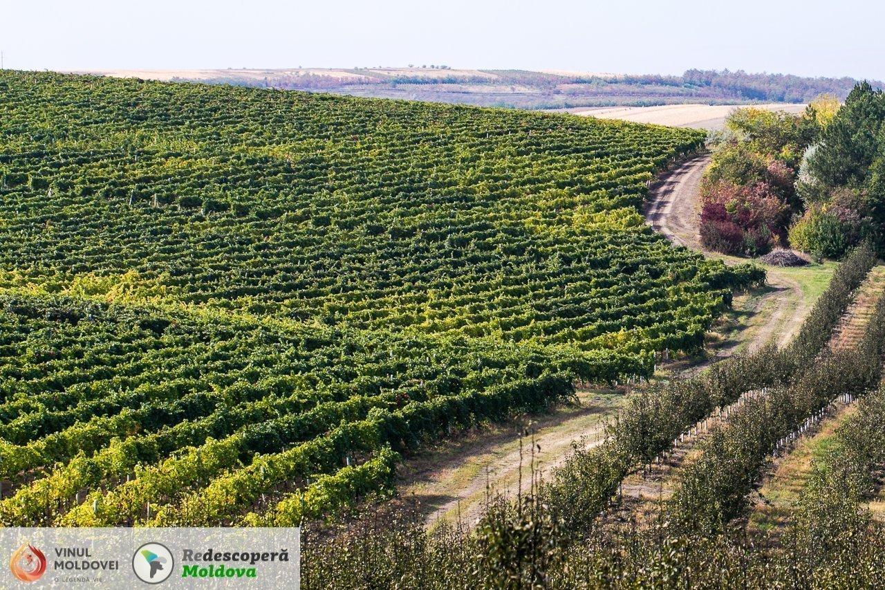 drumul-vinului-day6-cricova-48