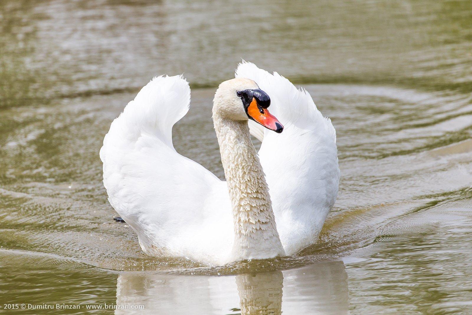 Purcari Estate - White Swan
