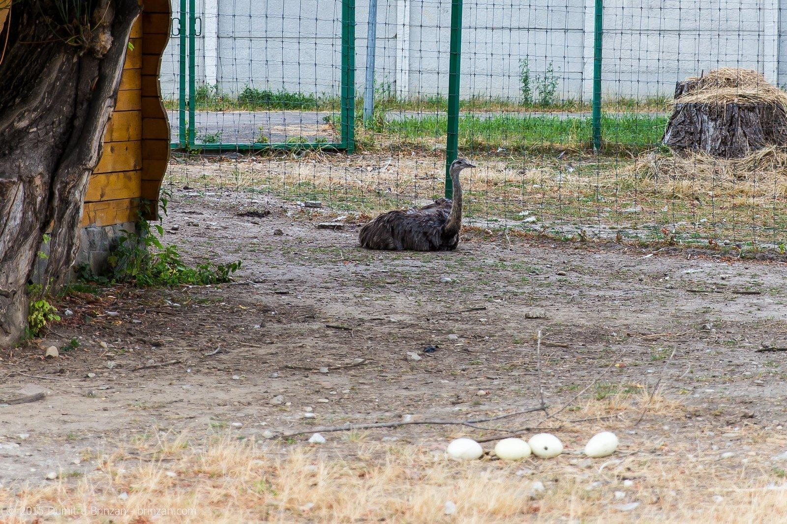 zoo-oradea-romania-2015-2