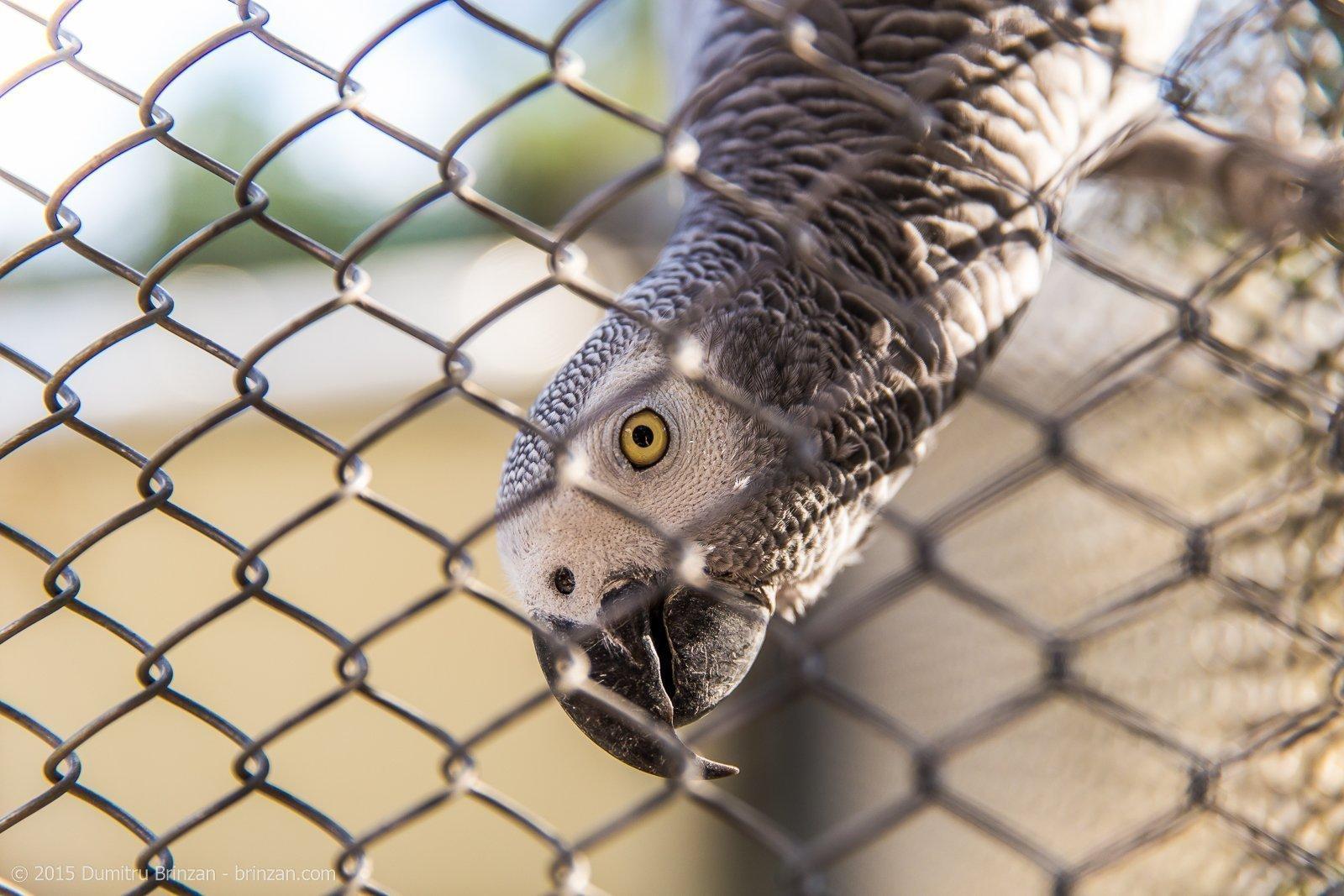 zoo-oradea-romania-2015-24