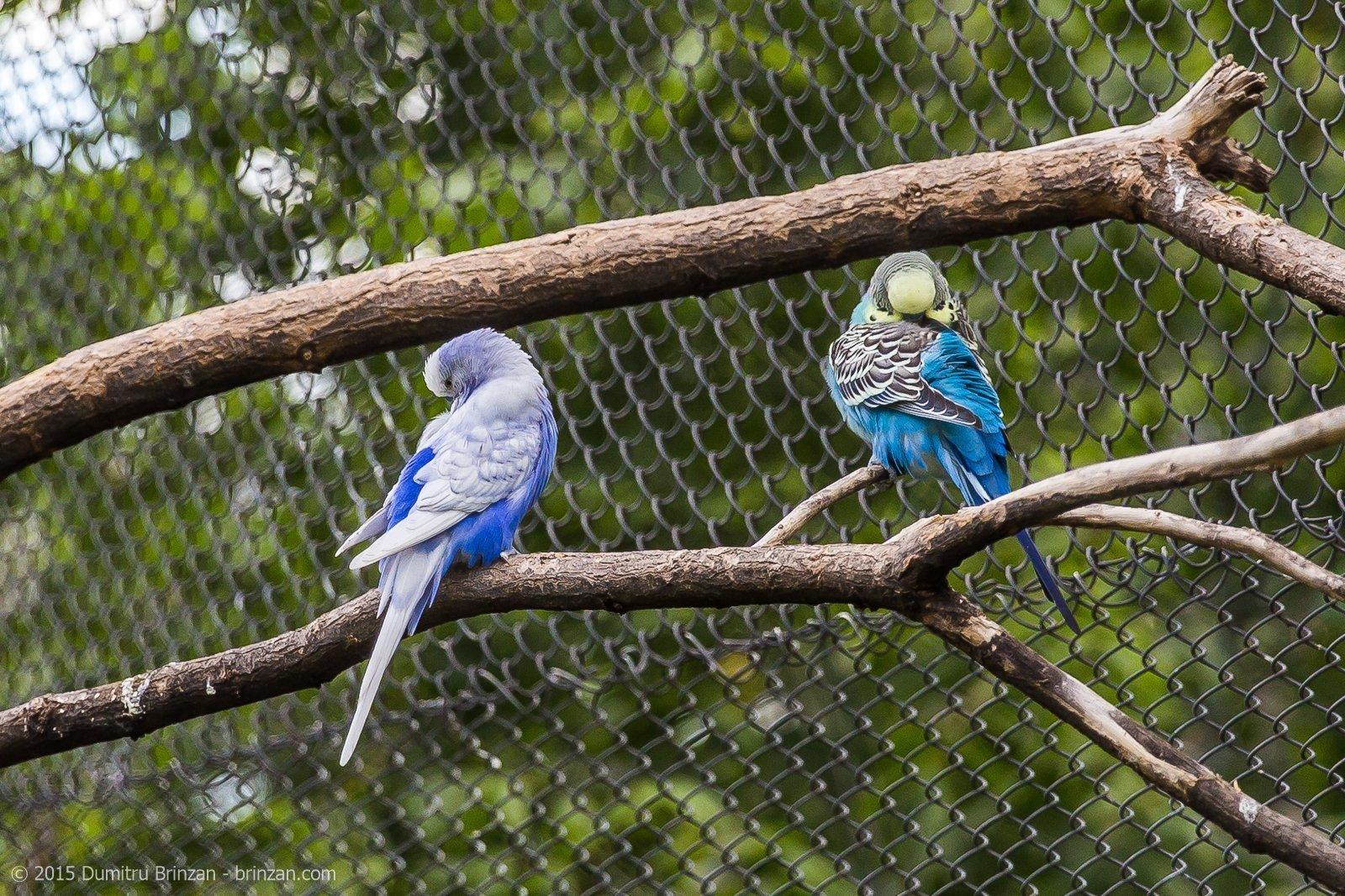 zoo-oradea-romania-2015-25
