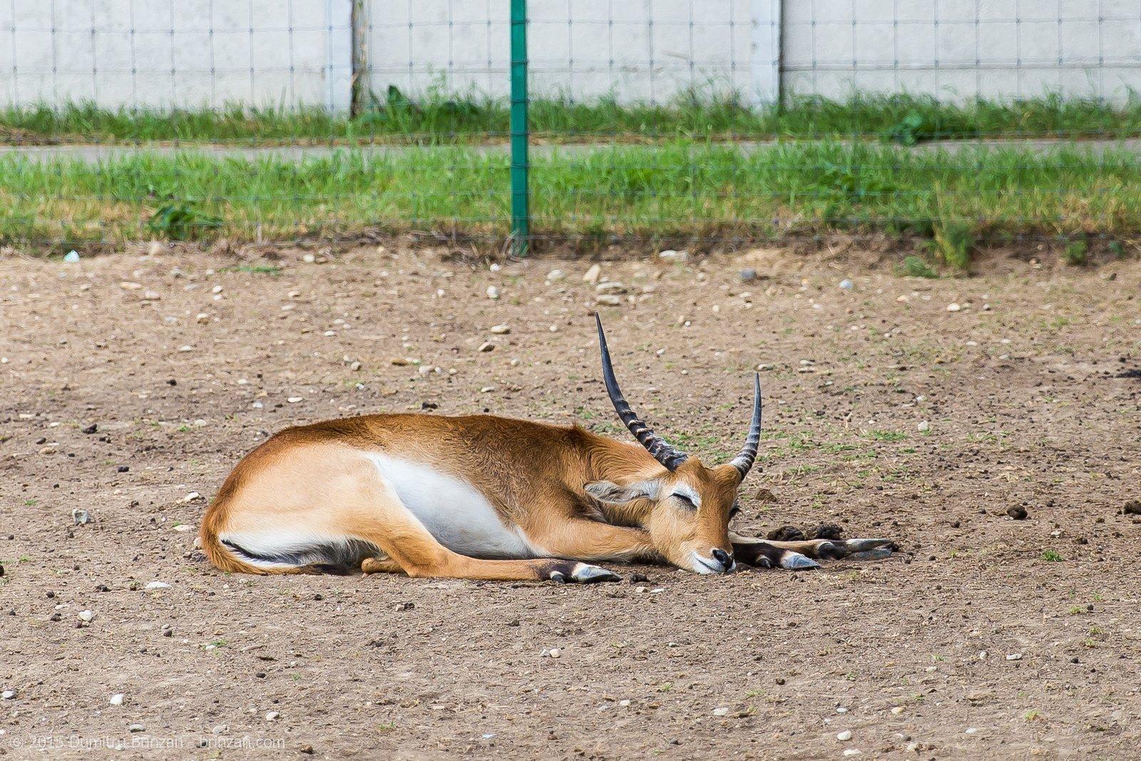 zoo-oradea-romania-2015-3