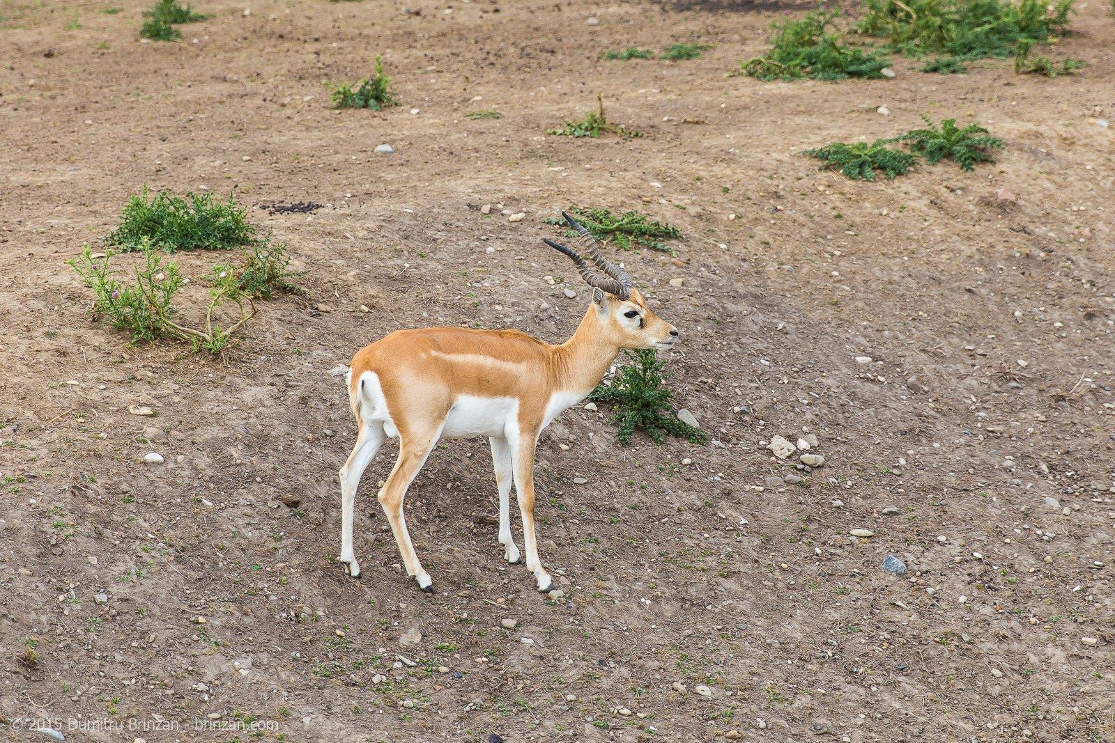 zoo-oradea-romania-2015-4