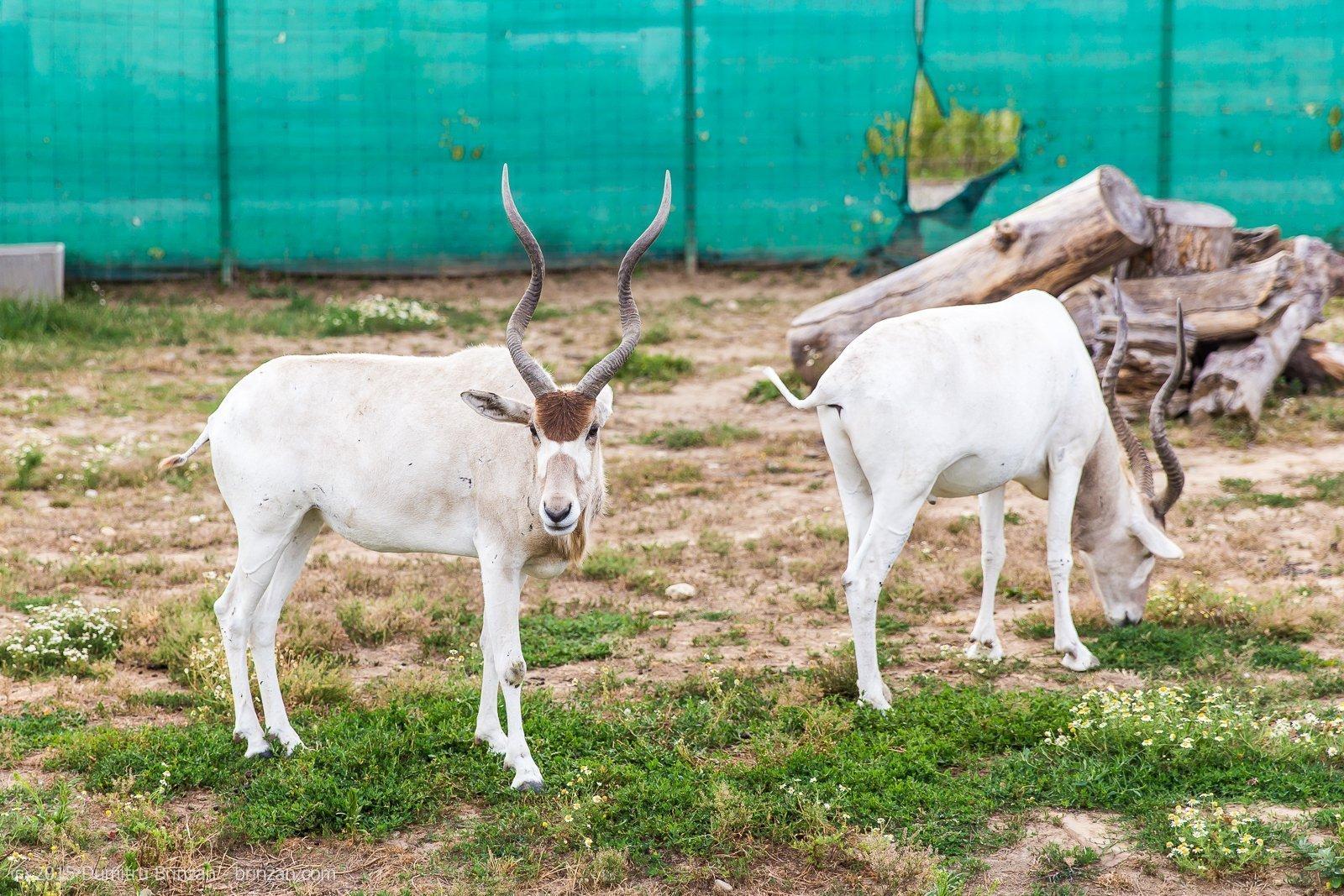 zoo-oradea-romania-2015-5