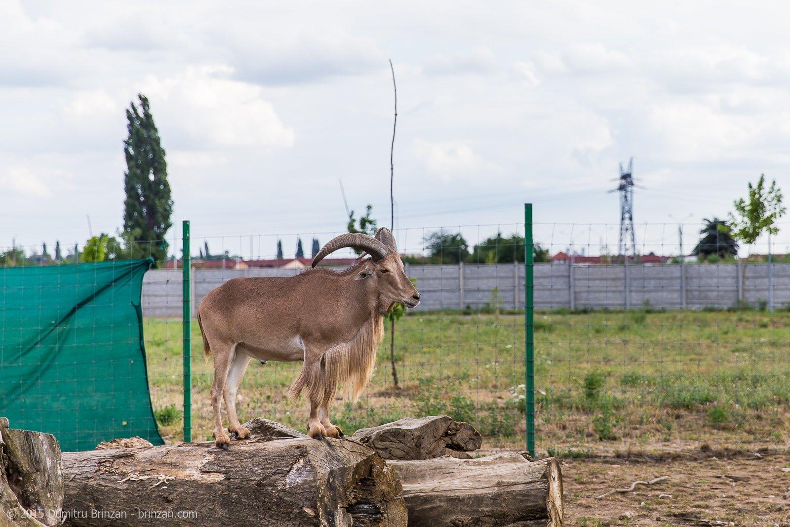 zoo-oradea-romania-2015-6