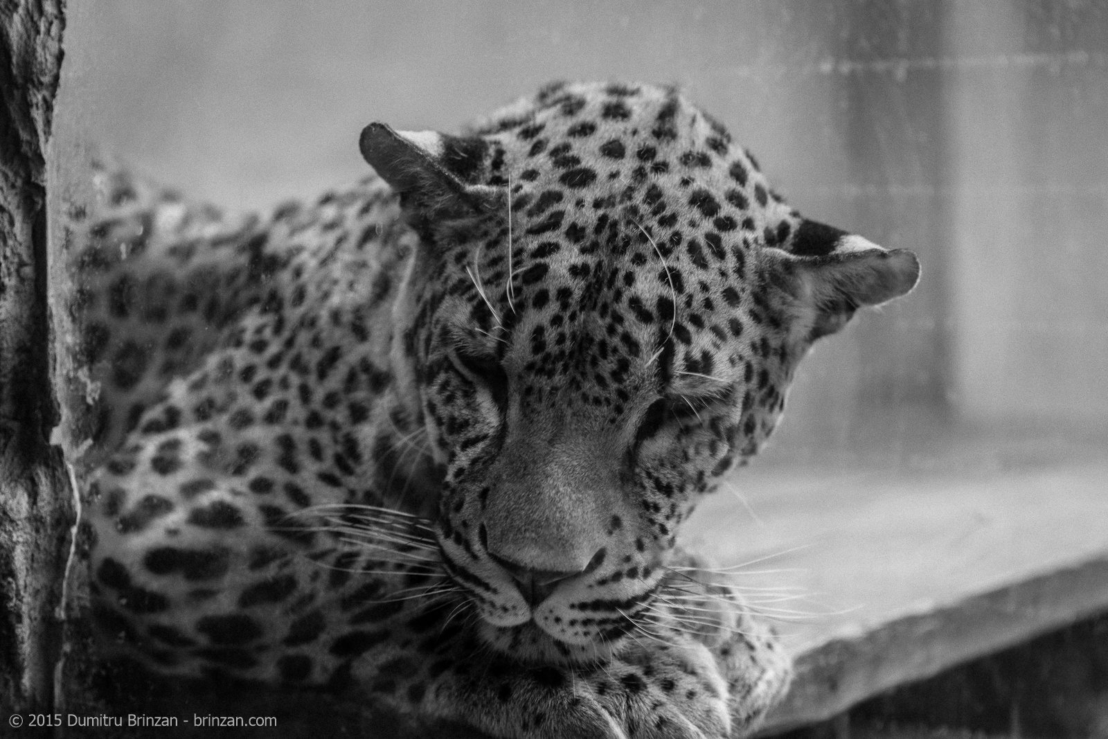 This leopard behind a glass wall was probably the saddest moment of this experience.