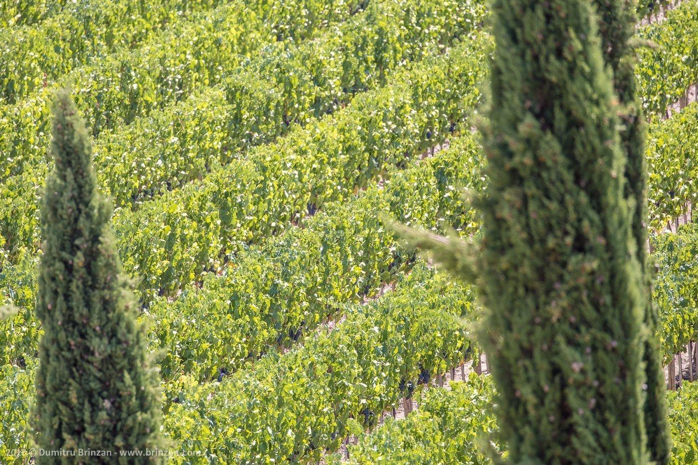2015-poggio-antico-tuscany-italy-24