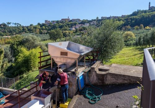 Thumbnail for Canneto Winery in Montepulciano, Italy