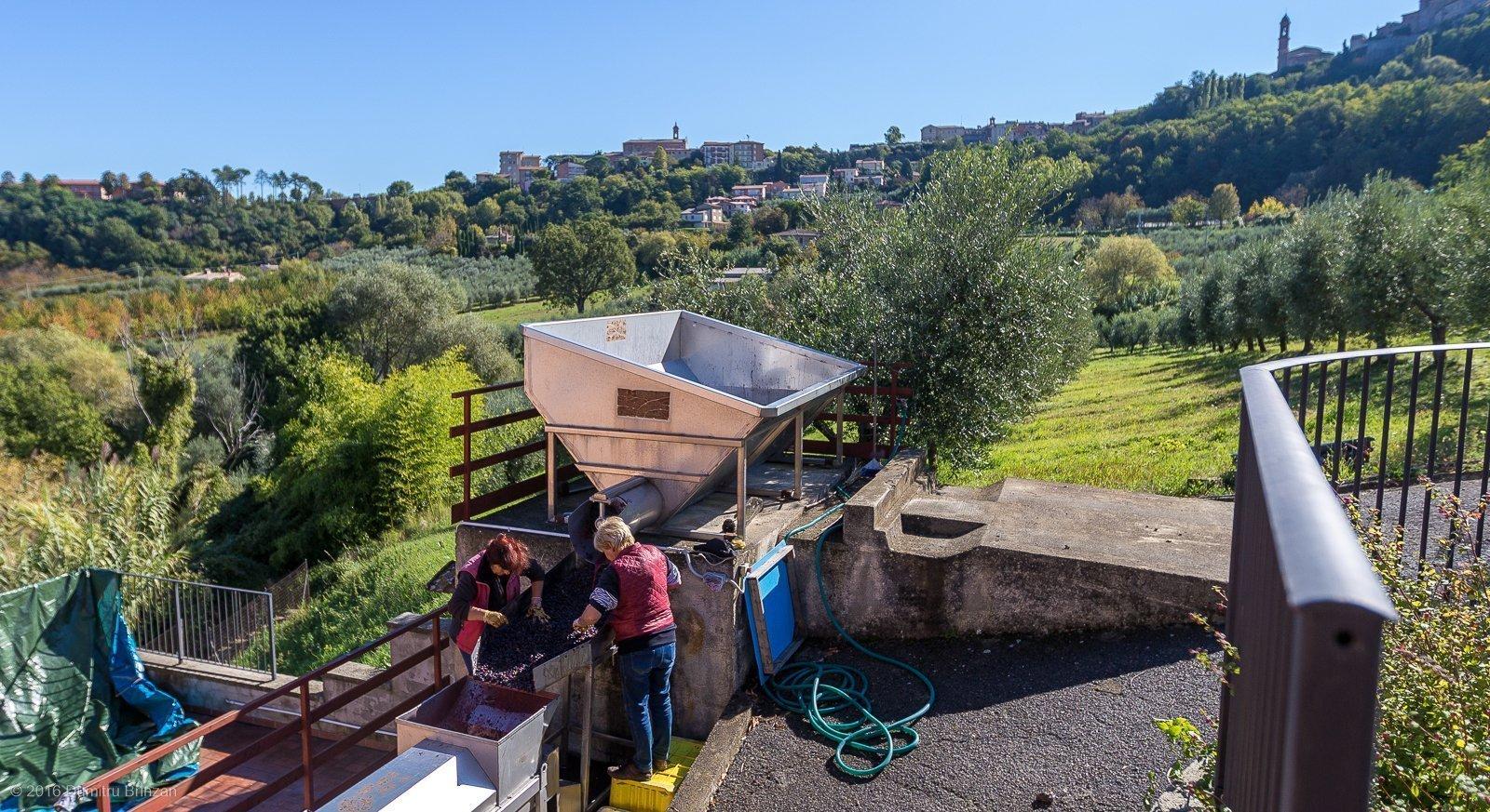2016-canneto-winery-montepulciano-10