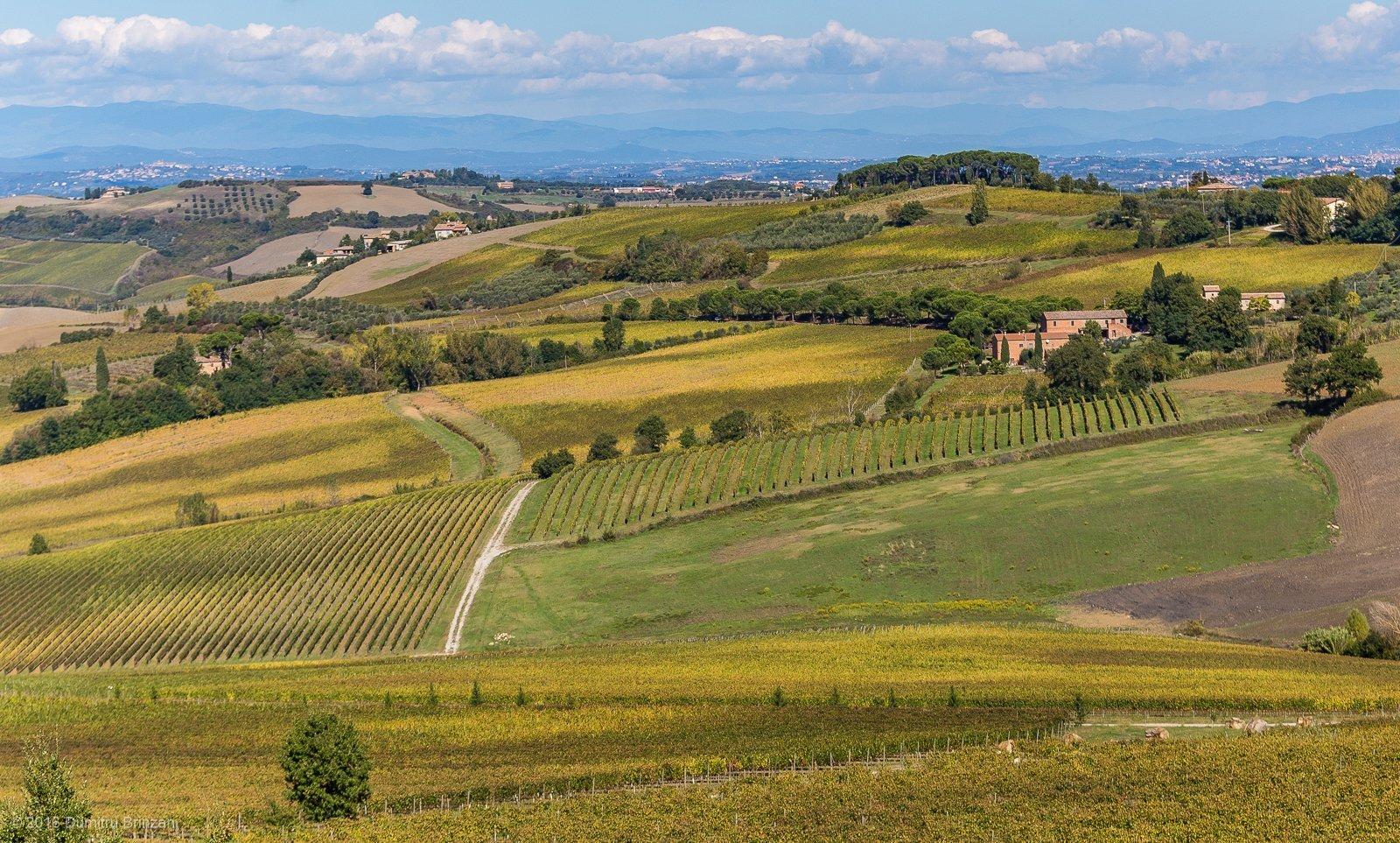 2016-canneto-winery-montepulciano-32