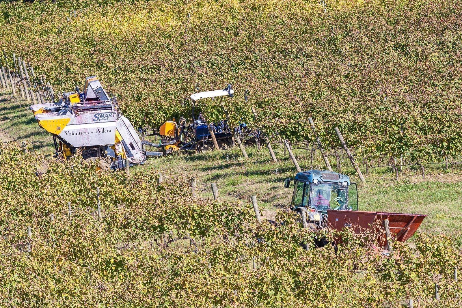 2016-canneto-winery-montepulciano-35