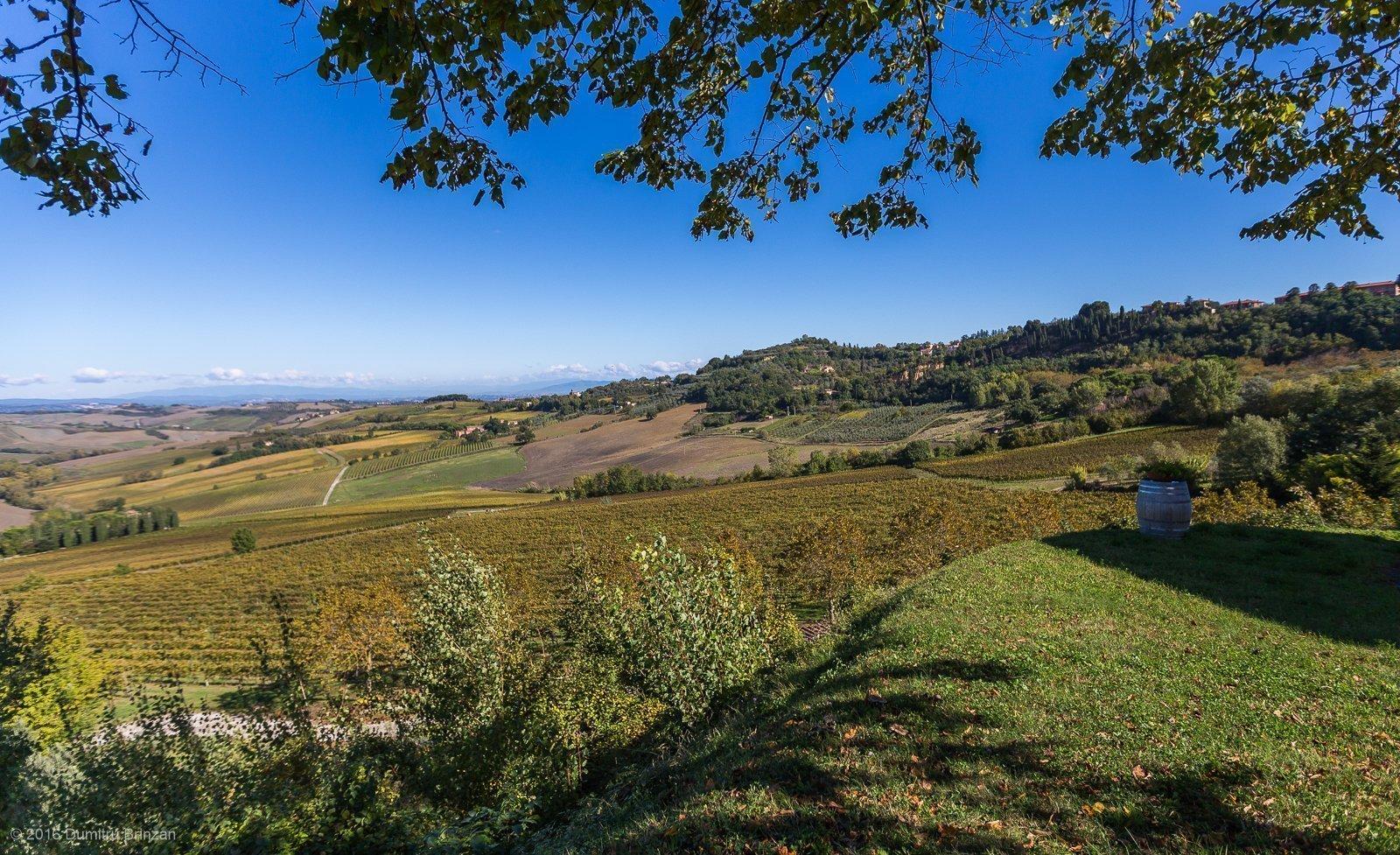 2016-canneto-winery-montepulciano-8