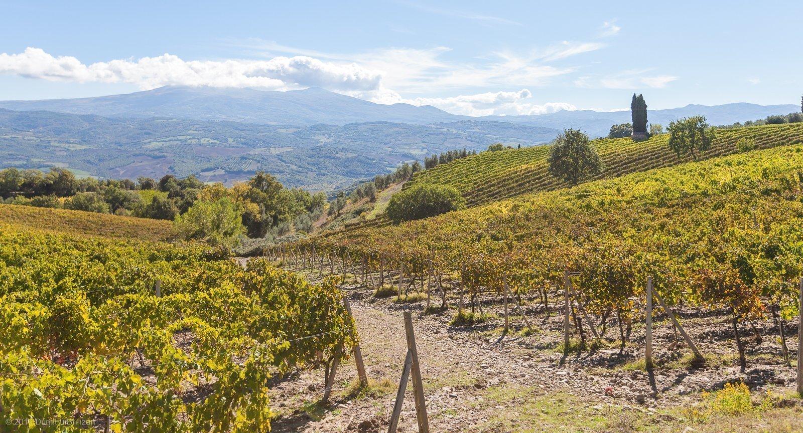 2016-podere-le-ripi-winery-montalcino-34