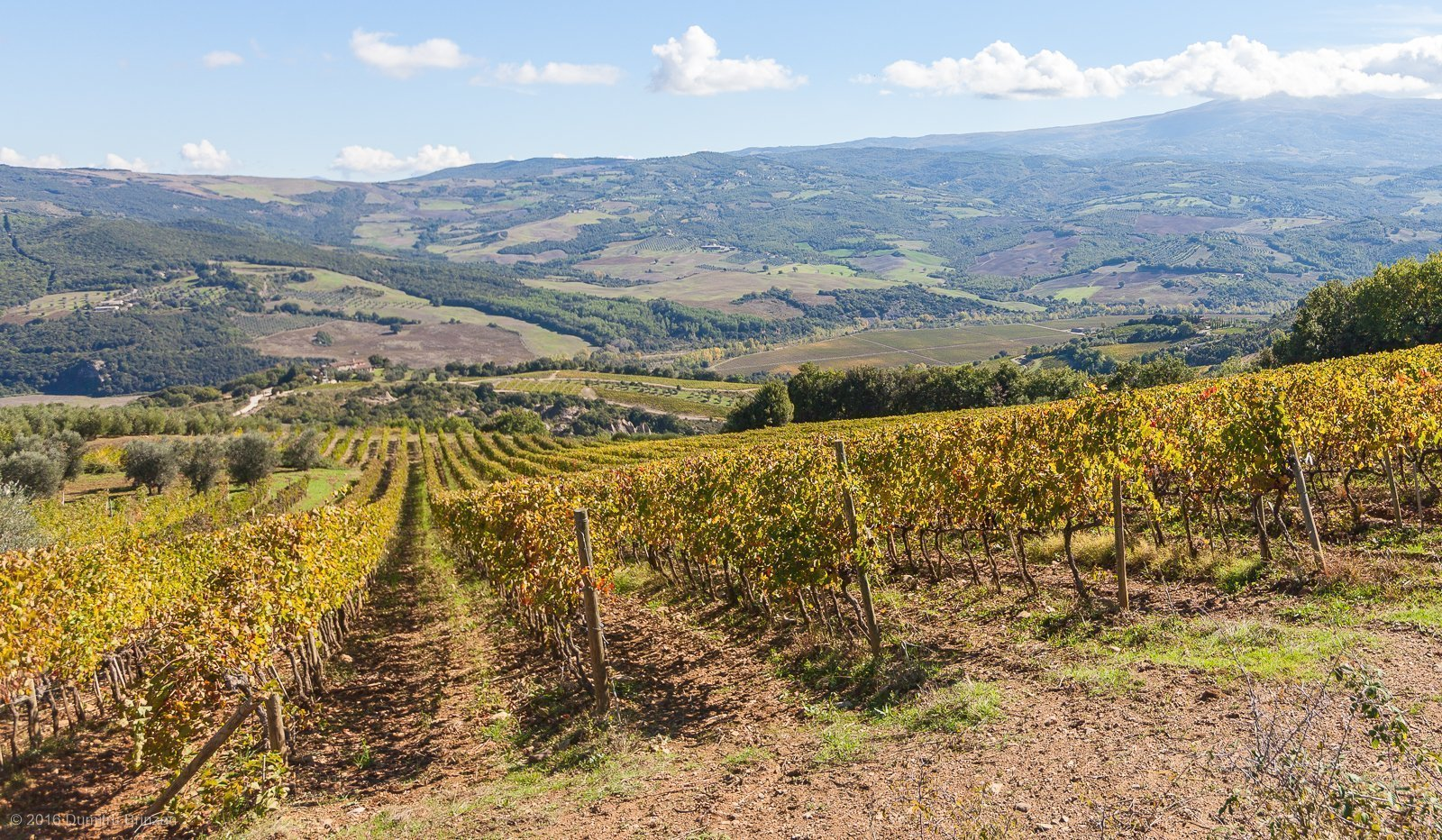 2016-podere-le-ripi-winery-montalcino-35